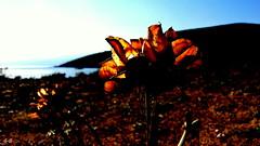 Good Morning Sun (S.Garten) Tags: corsika coast sun sunbeams sunrise blue sky mountains sea landscapes magic moments thebeautyofnature the silence nature waiting for sunny day ilovenature