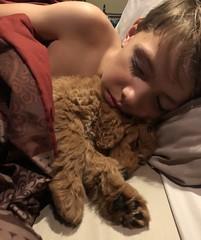 Haper sleeping with her human