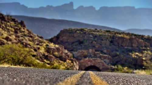 An Ant's Perspective (Big Bend National Park)