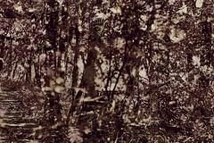 0808 03 (pni) Tags: nature park forest tree multiexposure multipleexposure tripleexposure hiidenkiukaanpuisto jätterösparken lövö lehtisaari helsinki helsingfors finland suomi pekkanikrus skrubu pni leaf foliage