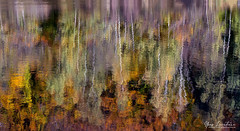 Water painting (Toucaly) Tags: wood france sunny birdseyeview picardie forestlandscape automne fall etang paysageforestier ensoleillé plongée agnetz forêt forest autumn etangdelagarde pond reflection europe reflet oise