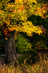 Autumn in MN (jmayramaker) Tags: minnesota fall leaves tree colorful canon outdoors