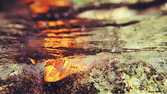 Swimrun Oeil de Verre Grotte Bleue octobre 201700055 (swimrun france) Tags: calanques provence swimming swimrun trailrunning training entrainement france
