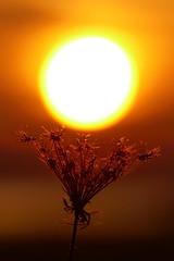 Sonnenfänger... (Don Bello Photography) Tags: herbst 2018 sonne abendsonne abendlicht himmelsbilder silhouette acdsee panasonicfz1000 lumixfz1000 kleinnemerow tollensesee mecklenburgvorpommern mecklenburgischeseenplatte reinhardbellmann donbellophotography mv