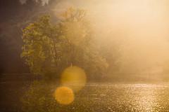 Büdingen September 2018 (janeway1973) Tags: büdingen hessen deutschland germany thiergartenweiher forest wald trees bäume lake see teich weiher pond early morning früh morgens scenery landschaft landscape