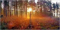 Herbstmorgen im Wald (Christoph Bieberstein) Tags: tschechien tschechische republik böhmen rakovnická pahorkatina manětínská vrchovina karlovarský kraj česko čechy ceská republika czech republic bohemia sunrise sonnenaufgang morgen morgenstimmung morning herbst autumn podzim wald wood forest les nebel mlha fog