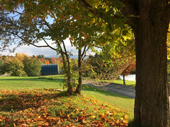 Hammock (LeahMarena) Tags: hammock tree fall leaf orange autumn foliage ecovillage