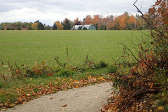 October at the cottage (Simon -n- Kathy) Tags: thornbury ontario greycounty fall autumn trees walk path hike apples