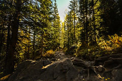 The Crater Lake Trial (nbalsaleh) Tags: aspen colorado fall autumn colors trial hike trees landscape d7200 wideangle photography lake september maroon bells mountains 50mm 1020mm nikon clouds leaves