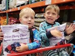 Frozen berries are so cold! (quinn.anya) Tags: sam paul toddler kindergartener costco cart frozenberries shoppingcart