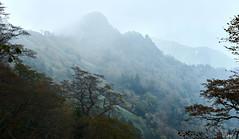 Mt.Ishizuchi 愛媛  西条市 石鎚山10 14 2018 (tsake123) Tags: sony sky sel2470z fog alpha a7 alpha7 mountain mist morning captureone c1 cloud forest 石鎚山 sonyflickraward