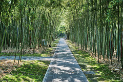 Bambugången (johan.bergenstrahle) Tags: 2018 april china finepicsse hdr kina shanghai spring vår