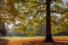 Muenster_Suedpark_2018_autumn-1354 (encyclopaedia) Tags: münster muenster südparl park herbst autumn baum bäume herbstlaub tree trees gegenlicht westfalen westphalia germany brd lightroom raw