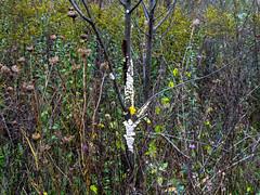 P1020174 (rpealit) Tags: scenery wildlife nature weldon brook management area
