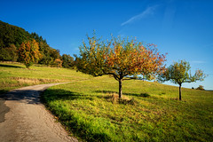 Waldsaumweg 11 (Wolfgang Staudt) Tags: waldsaumweg losheimamsee saarland hunsrueck deutschland hausbach britten wanderweg traumschleife rundweg wandern natur wald waldrand laendlich abgelegen tourismus saarhunsruecksteig saarschleifenland
