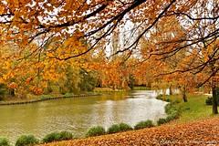 Parc Barbieux ( Nord- France ) (J'aime voir la nature ainsi !!!) Tags: arbre feuille parc soleil automne eau