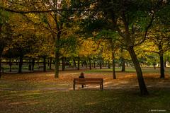 En el otoño (AvideCai) Tags: avidecai otoño paisaje parque filtro tamron2470 color gente arboles