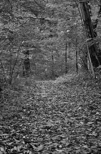 A Portrait Orientation to a Path Covered in Fallen Leaves (Black & White, Mammoth Cave National Park)