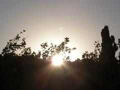 Ψίνθος (Psinthos.Net) Tags: ψίνθοσ βουνό δέντρα κλαδιάδέντρων πλάτανοσ κυπαρίσσι φύλλα ήλιοσ φώσ φώσήλιου φώσηλίου ουρανόσ θάμνοι φύλλαφθινοπώρου φθινοπωρινάφύλλα αχτίνεσήλιου ξημέρωμα αυγή πρωί πρωίφθινοπώρου φθινοπωρινόπρωί ανατολήήλιου φθινόπωρο σεπτέμβρησ σεπτέμβριοσ σκοτάδι σκιά psinthos mountain trees treebranches planetree cypresstree sun light sunlight sky shrubs autumnleaves leaves morning dawn autumn september darkness dark shadow sunrays sunrise ξημερώνει itdawns daybreak χάραμα vrisiarea rvrisipsinthos vrisi βρύση βρύσηψίνθοσ βρύσηψίνθου περιοχήβρύση κοιλάδαψίνθου κοιλάδα valley psinthosvalley
