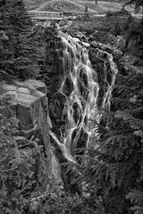 Myrtle Falls in B/W (Philip Kuntz) Tags: blackandwhite bw monochrome waterfall myrtlefalls edithcreek paradise mtrainier mtrainiernationalpark washington