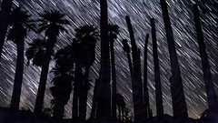 Star Trails Grow Behind Palm Trees at Corn Springs, California (slworking2) Tags: cornsprings desert california timelapse night sky starstax startrails astronomy