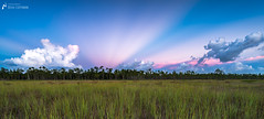 Anti-Crepuscular Rays over the Everglades (J.Coffman Photography) Tags: big cypress everglades national park landscape trees swamp florida united states forest marsh clouds nikon d810 hike hiking wilderness sunshine fl state preserve wet season grass tree anticrepuscular rays anti crepuscular