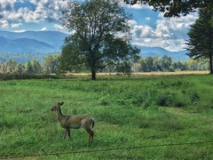 Cade's Cove wildlife. (RansomedNBlood) Tags: