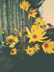 #simplicity #flowerspower (karsaipaula) Tags: simplicity flowerspower