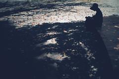 autumn has come (N.sino) Tags: m9 ultron35mmf17 ikebukuro park shadow autumnleaves fallenleaves 秋 落葉 公園 池袋 影