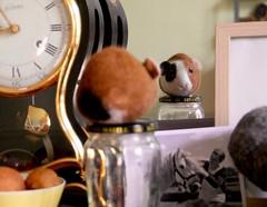 guinea pig (swig - filz felt feutre) Tags: swig filz felt feutre laine wool wolle nassfilzen wetfelted unikat pièceunique oneaofakind meerschweinchen cochondindy paris france