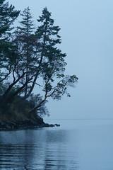 DSC00763 (andreavarju) Tags: beach coast coastline fog trees ocean water landscapephotography landscape