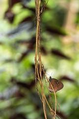 Dans une jungle de couleurs (Dalt-Gilles) Tags: papillon macro nacreimagesstagesphotos stagesphotos coursphoto formationphoto caen normandie calvados cotentin manche