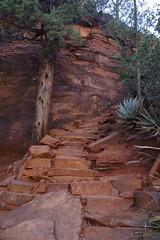 devil's bridge trail (EllenJo) Tags: westsedona nationalforest arizona sedona az october15 2018 hike dogwalk ellenjo devilsarch redrockcountry secretmountainwilderness pentaxks1 autumn steps trail steep redrock trail120