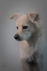 A Sad Boy (AJ - Andrew Jones) Tags: dog animal mammal portrait canon m50 pet china stray adopt