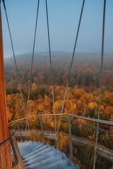 Descending towards autumn (FocusPocus Photography) Tags: wald forest bäume trees herbst autumn fall schönbuch aussichtsturm viewingtower schönbuchturm herrenberg jahreszeit season aussicht view