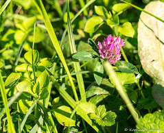 P1000531.jpg (DrOpMaN®) Tags: 1445mm panasonic gx1 lumix flowersplants m43turkiye