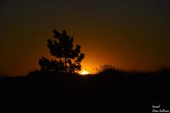 Sunset (Ismael Owen Sullivan) Tags: galicia foto fotografia d5300 digital cielo sky gallego españa europa travel photography arousa sun sunset sombras shadow tree traveler horizont horizonte
