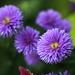 Flowers / 花(はな)