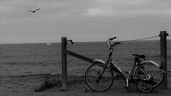 The Beautiful (Rand Luv'n Life) Tags: odc our daily challenge beautiful discarded damaged bike fence post sunset cliffs san diego california pacific ocean swell seagull flying sailboat horizon outdoor composition monochrome blackandwhite coastal marine view