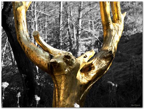 L'arbre d'Or au Val Sans Retour