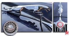 La Jaguar MK2 version 3.8 était la plus sportive (mamnic47 - Over 9 millions views.Thks!) Tags: suresnes suresnesautorétro journéesdupatrimoine voituresanciennes voitures 16092018 terrassedufécheray 6c8a2288 montage jaguar jaguarmark2