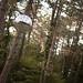 Disco arboretum