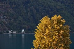 Lake Walen – Tree in evening light (Thomas Mülchi) Tags: walensee lakewalen lakewalenstadt cantonofstgallen switzerland 2018 lake mountain mountains tree golden goldenlight eveninglight evening mols ch