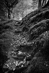 Inderø Skov ved Hald Sø 02 BW (Walter Johannesen) Tags: hald sø morgen natur nature morning skov træ tree træer trees wood