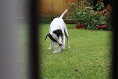 Love (cata.spv) Tags: pet dog canon canont5 beginner photo photografy house green home