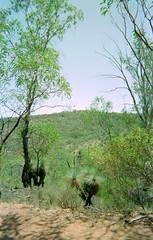 Semi-Arid Vegetation (Serendigity) Tags: australia semiarid scrub grasstree nationalpark sa southaustralia bushland au