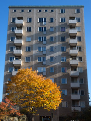 High-rise, Fruängen (mnords) Tags: autumn tree yellow orange red highrise stockholm fruängen sky contrasts snapshot