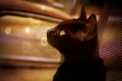 Street kitten ... 🐱 (Julie Greg) Tags: kitten animal cat colours details street pet