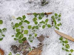 27197318 (aniaerm) Tags: snow ice frost