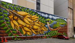 Bird Seed (Steve Taylor (Photography)) Tags: seed waxeye art graffiti mural streetart bird building cone roadcone trafficcone brown yellow green red grey block newzealand nz southisland canterbury christchurch city plant leaves branch perspective car automobile